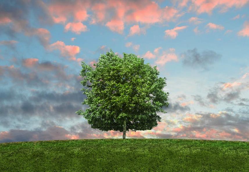Sous quel arbre désirez-vous vous abriter?