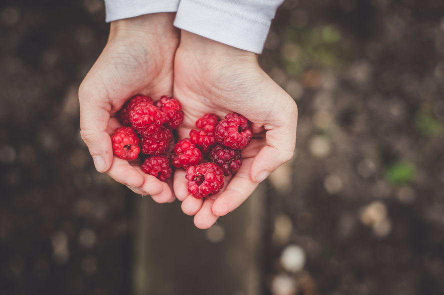 Saison et contre-saison : il y a des temps précis pour porter du fruit