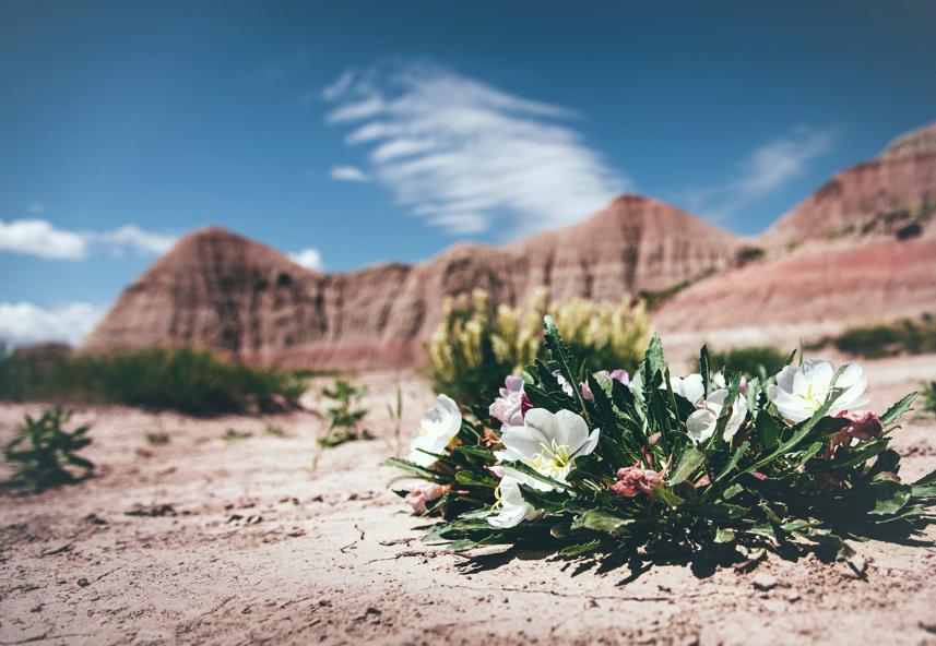La traversée du désert : quand Dieu te prouve Son amour