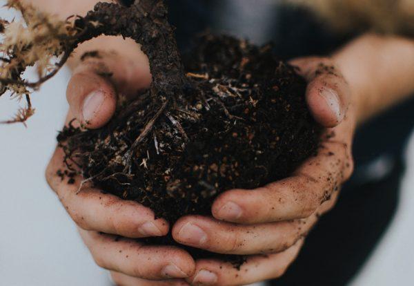Vous pouvez obtenir tout ce que vous voulez en mettant en terre la semence qu'il faut