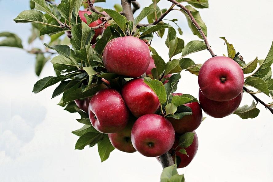 Porter du fruit digne de la repentance, de quoi s'agit-il ?